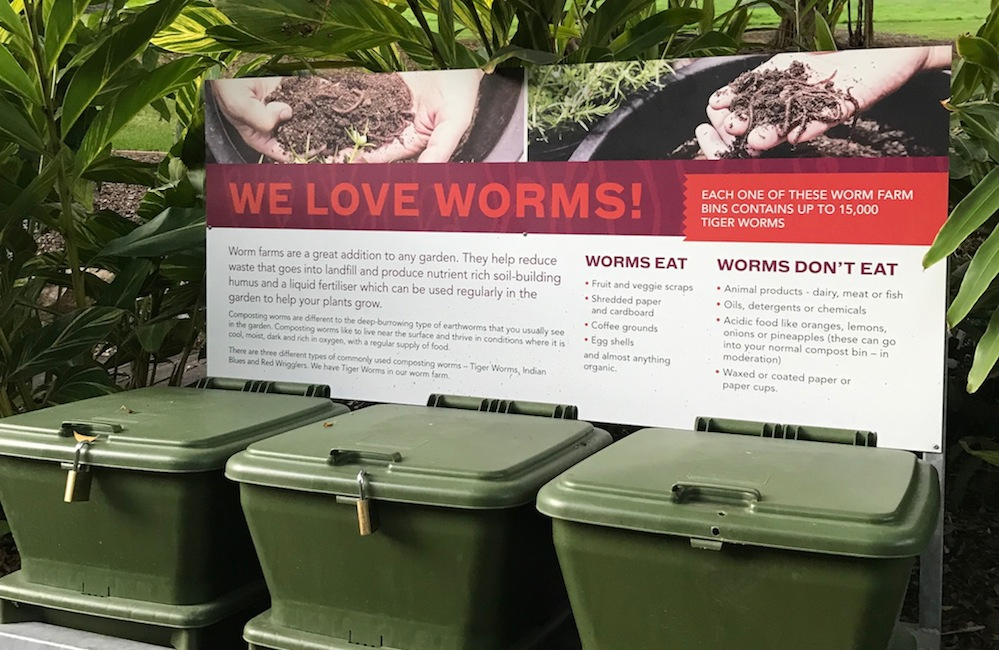 How to compost your food waste with a worm bin.jpg