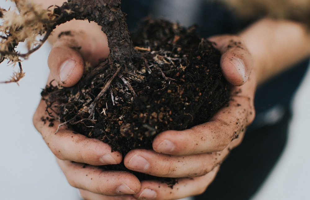 3 ways to compost your food waste 3.jpg