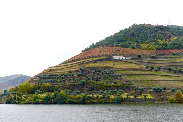 Like a painting. Scenery along the Douro.