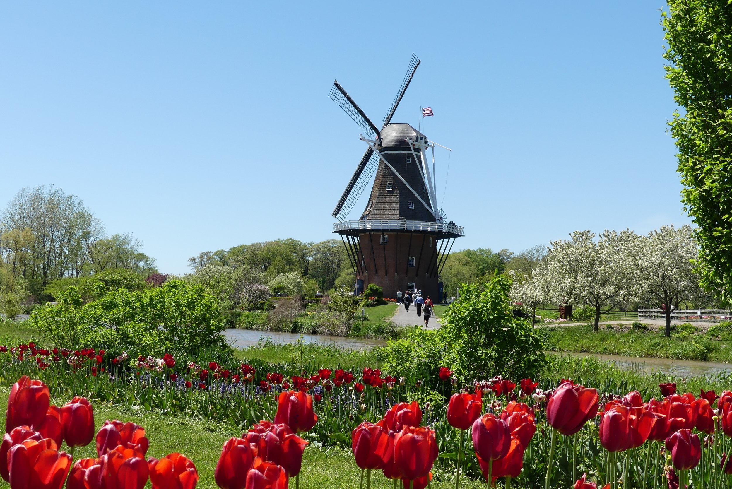 Holland Michigan. The De Zwaan Windmill