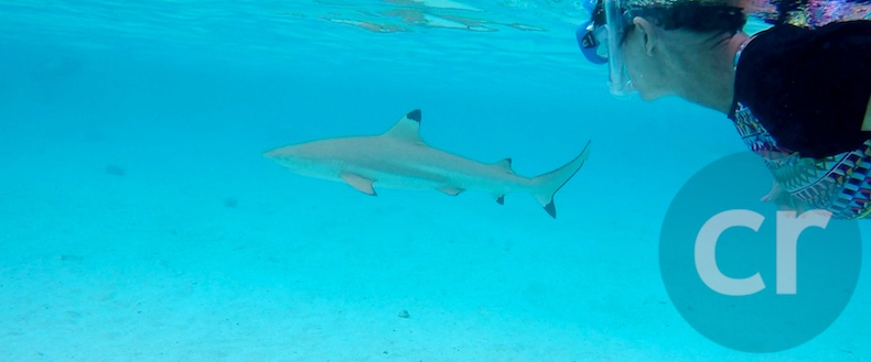 Rickee watches a Black-Tip Reef Shark swim by