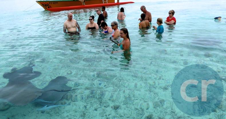 Tour participants stand on the sandbar as stingrays swim around them