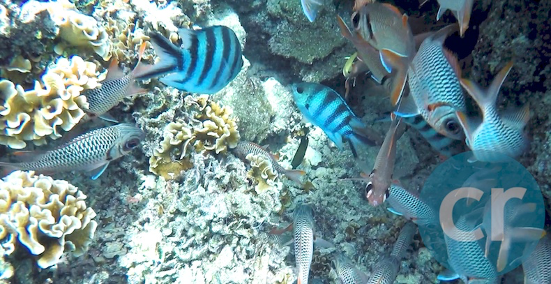 Colorful fish inhabit the coral garden