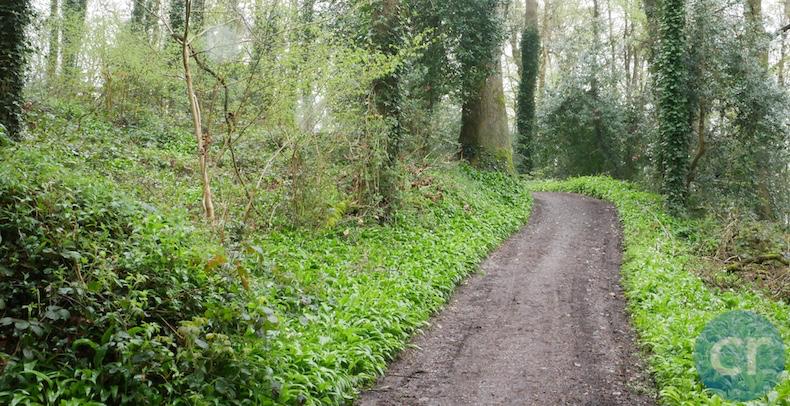 Path on grounds of Blarney Castle Cork Ireland