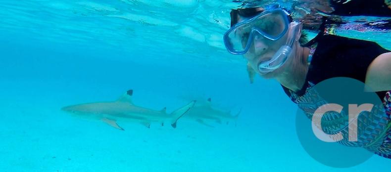 Rickee swims alongside reef sharks