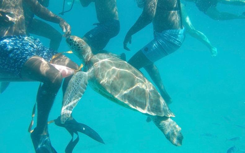 Friendly Sea Turtles from Cool Runnings catamaran.