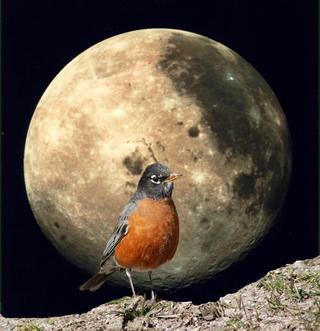 the-worm-moon.jpg