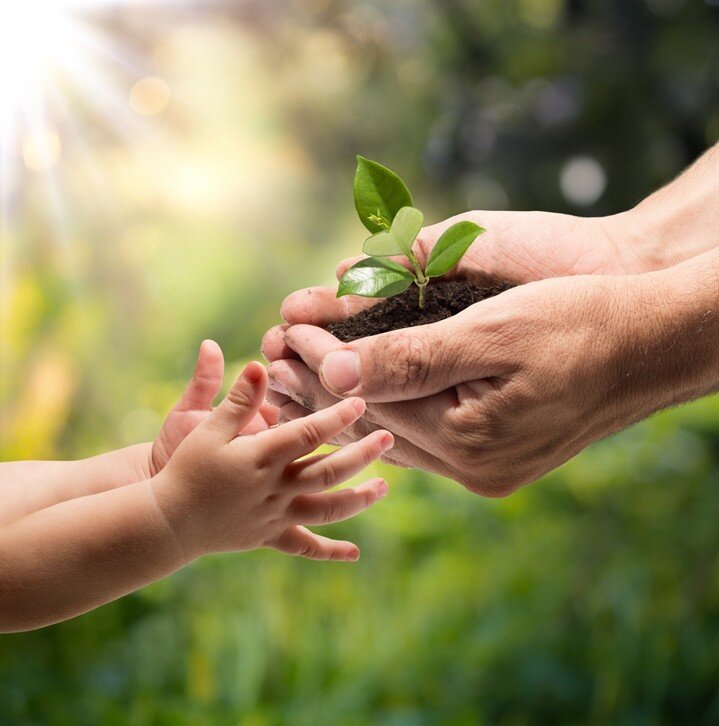 child-adult-hand-plant-sun.jpg
