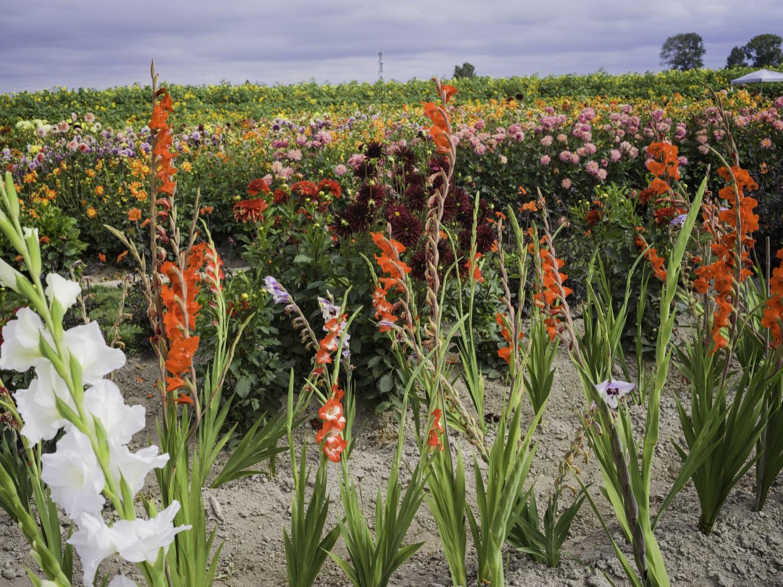 richmondsunflowers (7 - 34).jpg