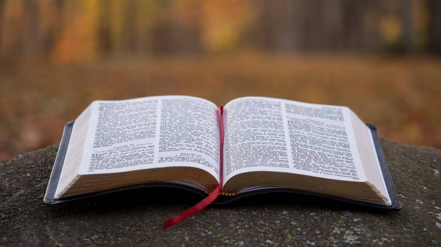 An open Bible on a stone in the forest