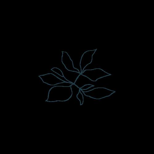 Amanda Steiner Design | Botanical Illustration