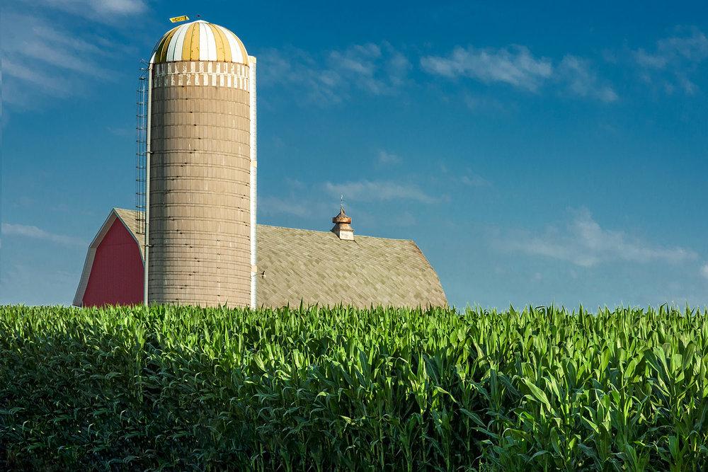 farm3.jpg
