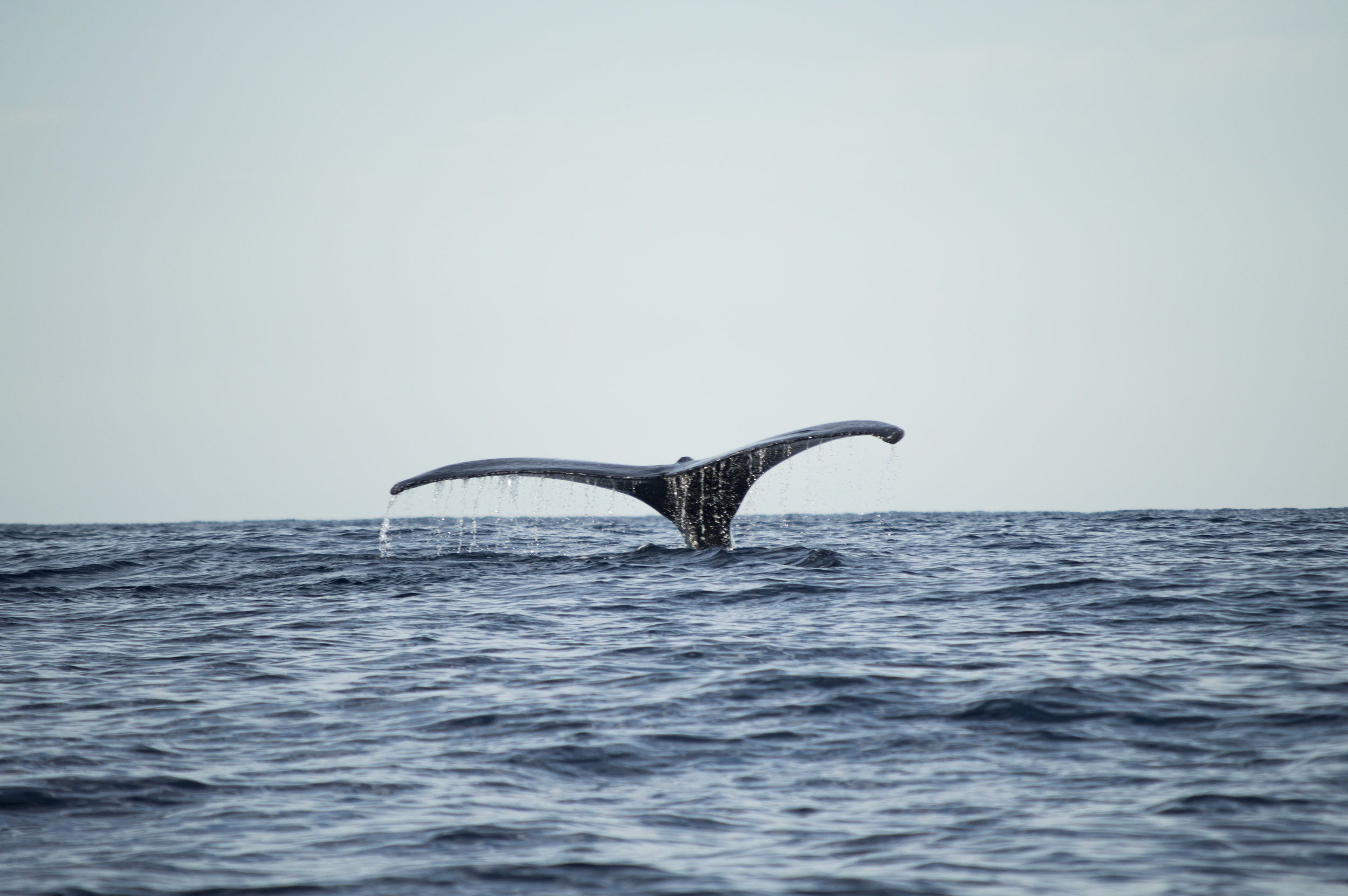 Whale Watching -