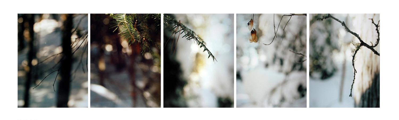 Boreal Forest/ Scintilla