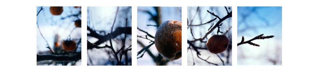 Orchard/ January
