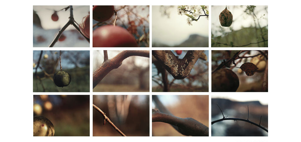 Orchard/ A Year