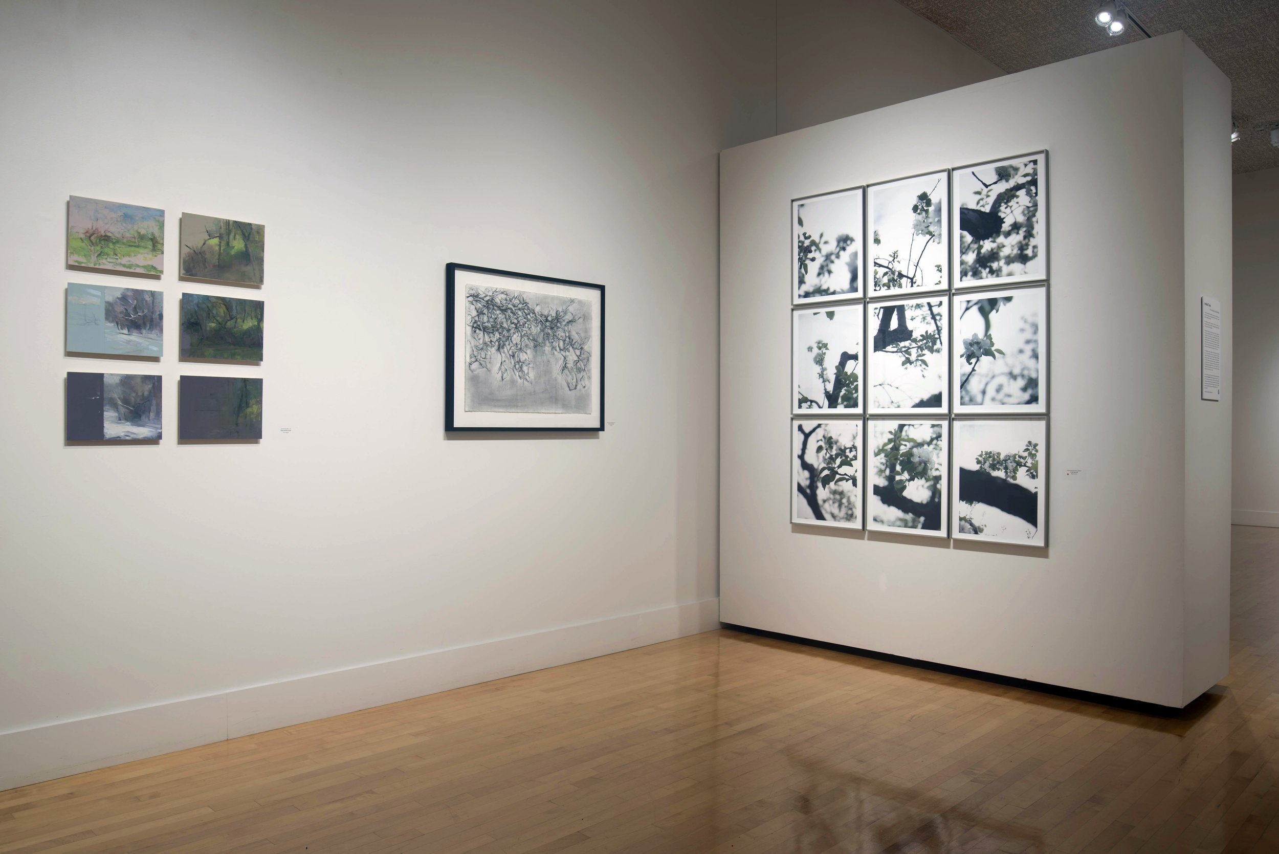 Old Orchard (Installation View)