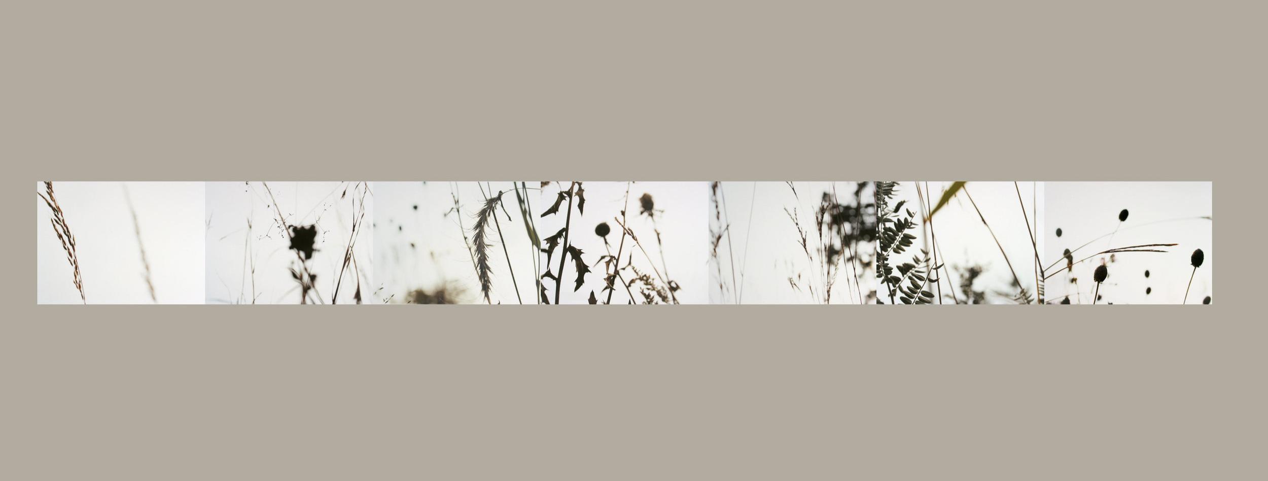 Prairie Grasses Limning