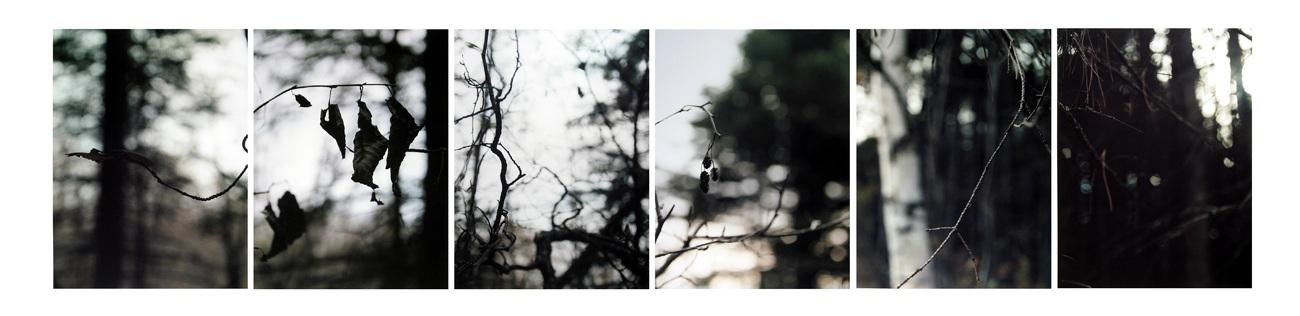 Boreal Forest/ November