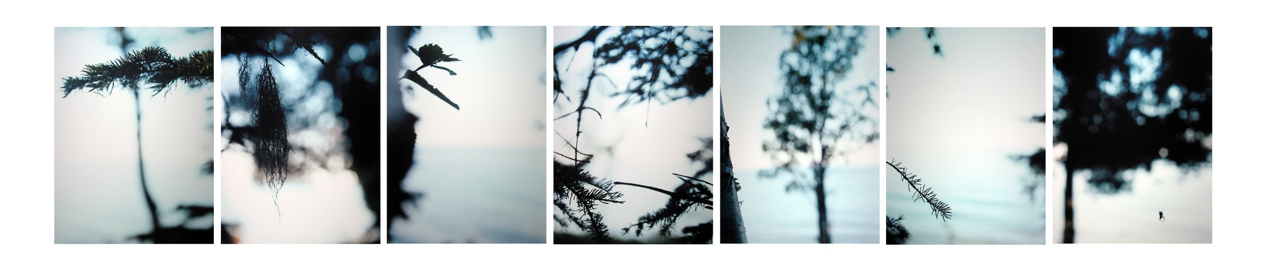 Boreal Forest/ Lake 1