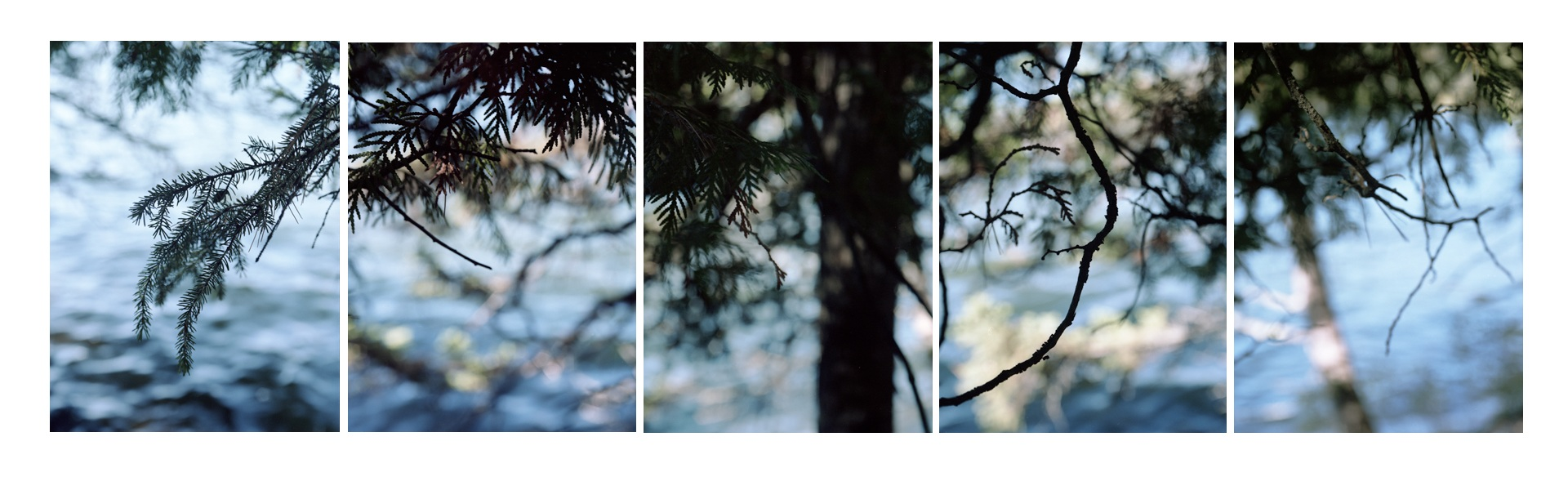 Boreal Forest / 18 Lake
