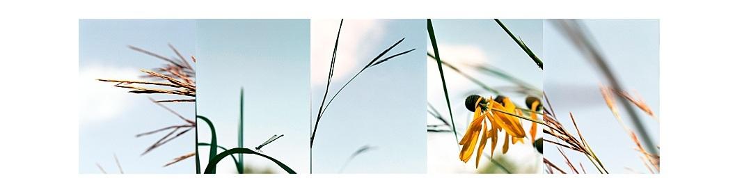 Prairie Grasses/ Wind