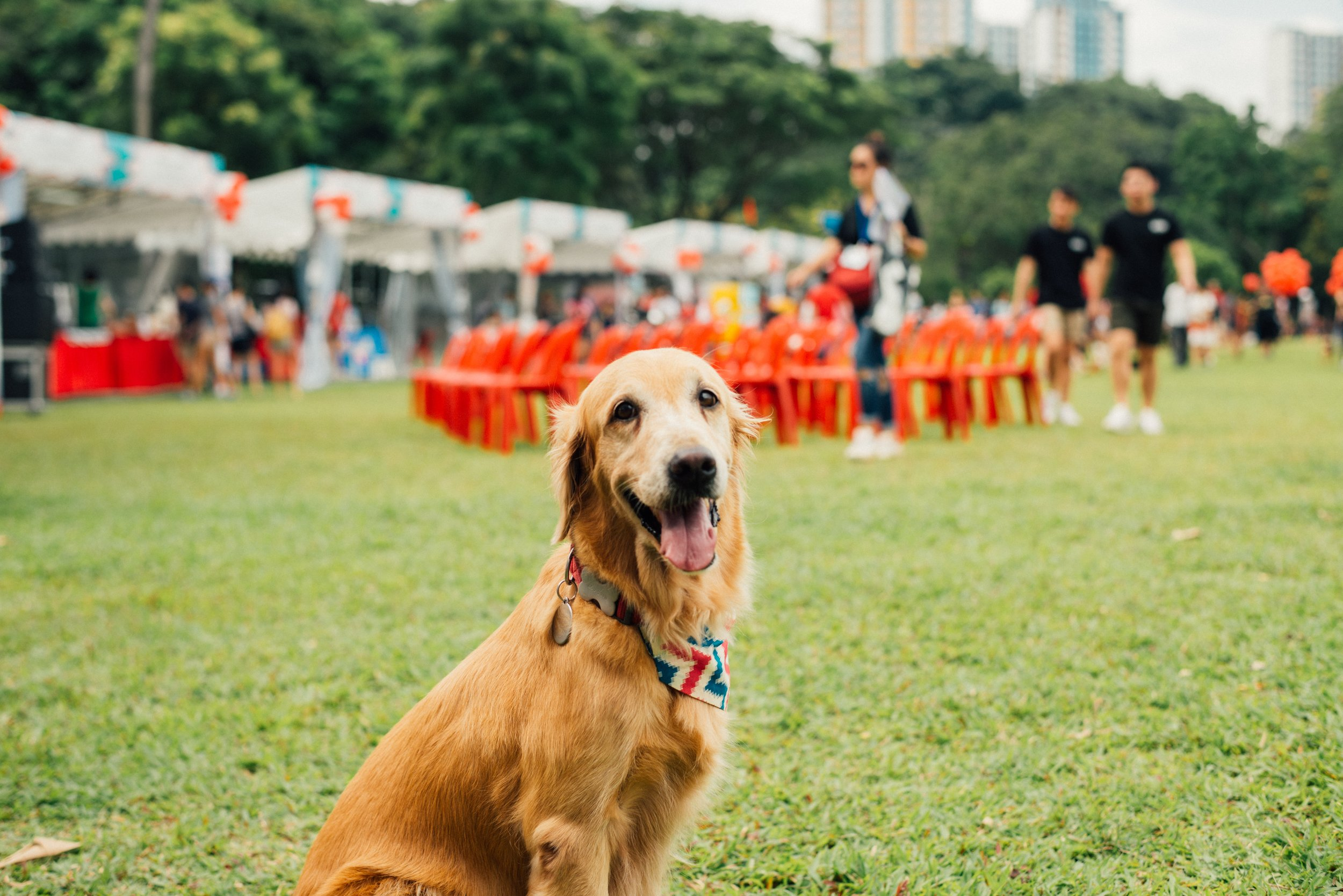 GET READY TO BOND WITH YOUR BEST FRIEND - Lexus of Edmonton Dog City Festival is Edmonton's festival designed for you and your dog. Dog City is everything you love about summer festivals in Edmonton with one amazing difference: DOGS. EVERYWHERE