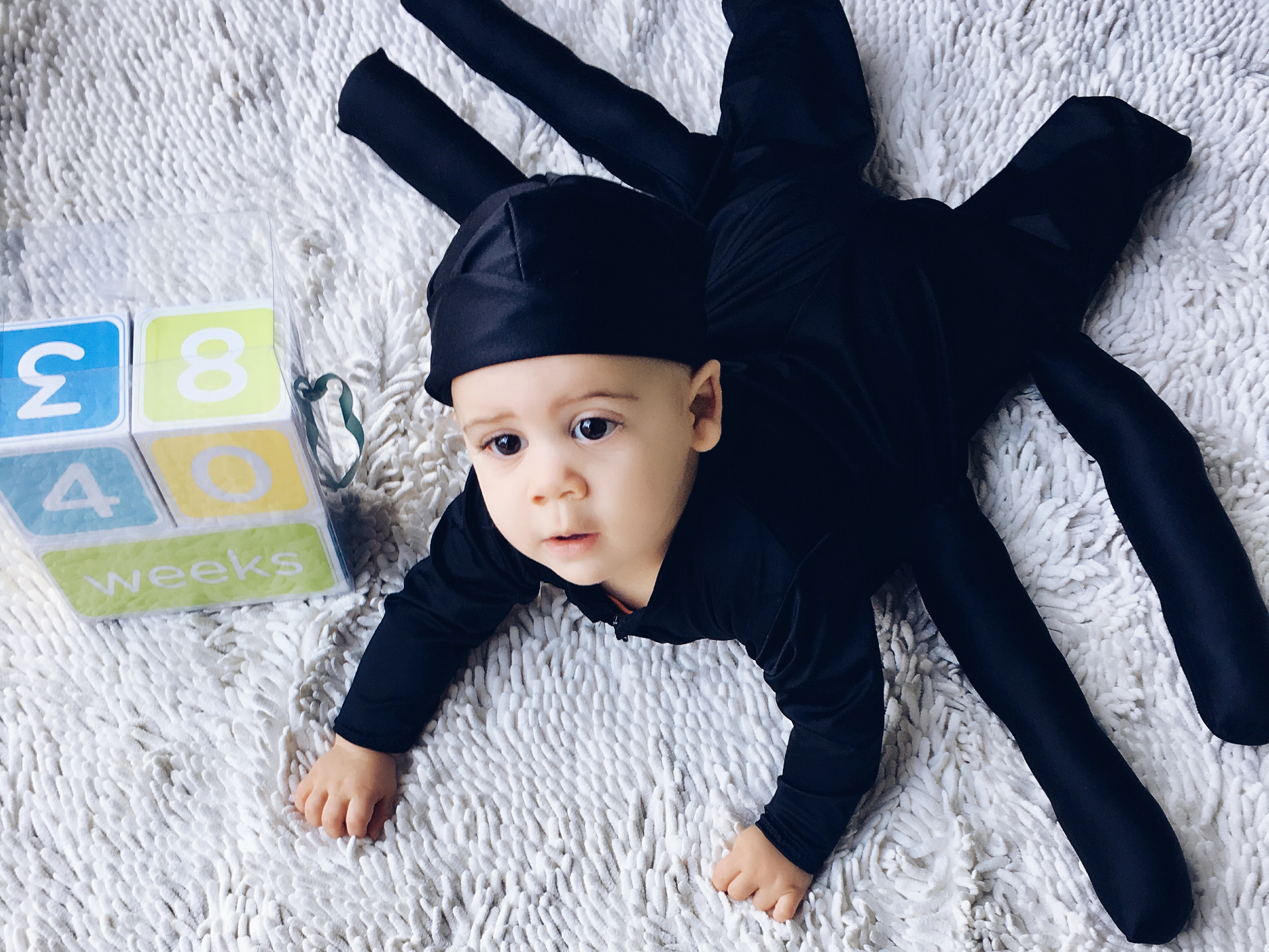 - A Fall photo shoot wouldn't be complete without a peek at his Halloween costume. Had to lay him on his belly to show off those spider legs!