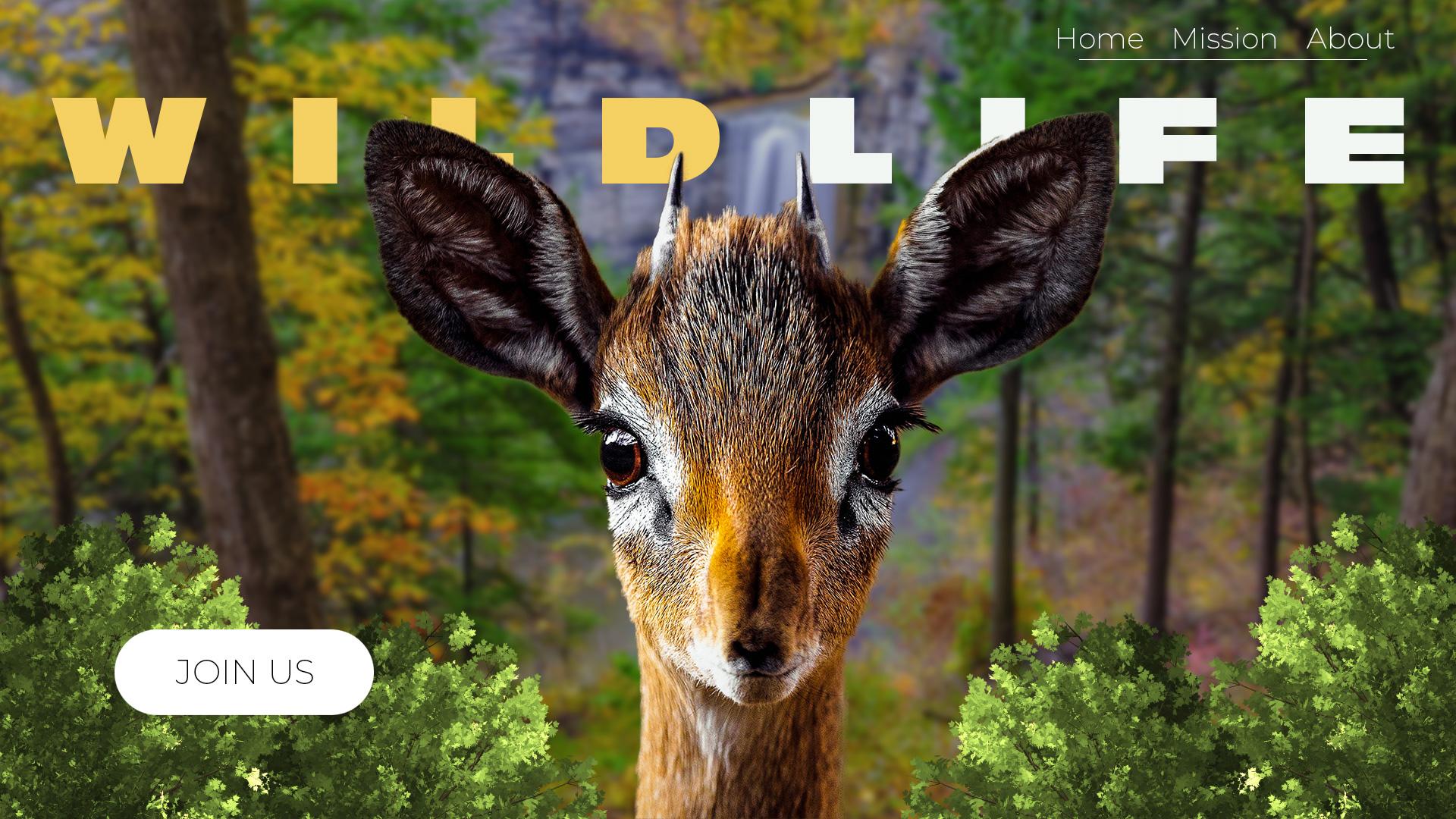 Wildlife-UI.jpg