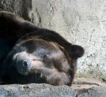 sleeping-bear