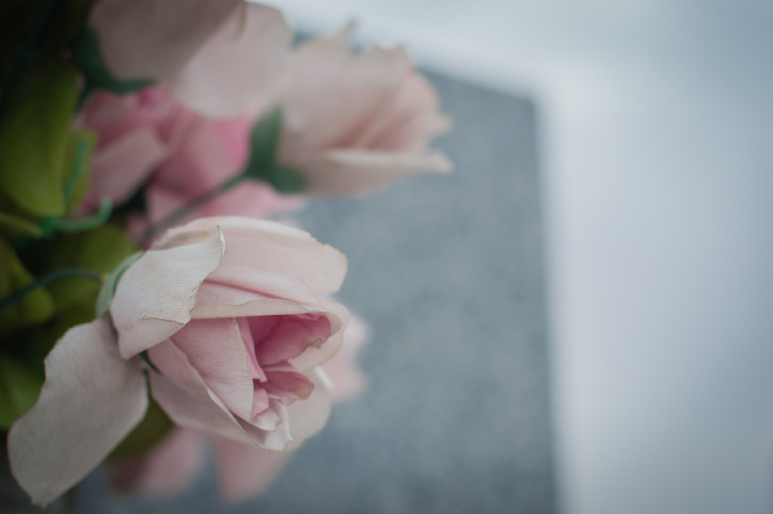 Flores en el cementerio (8 de 18).jpg