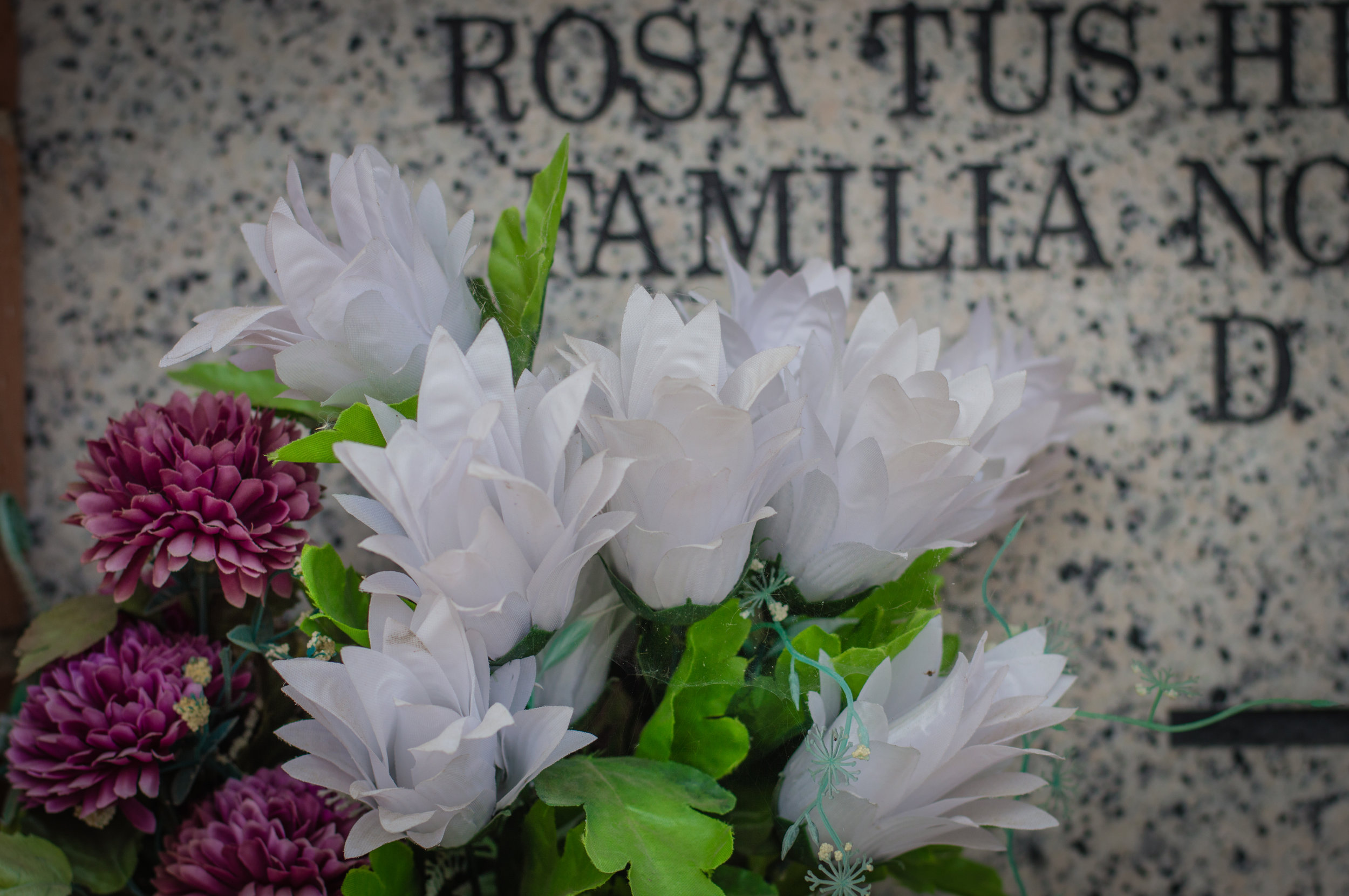 Flores en el cementerio (18 de 18).jpg