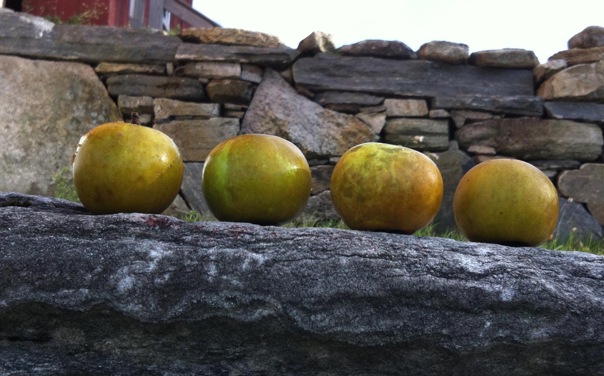 Hard cider apples.jpg