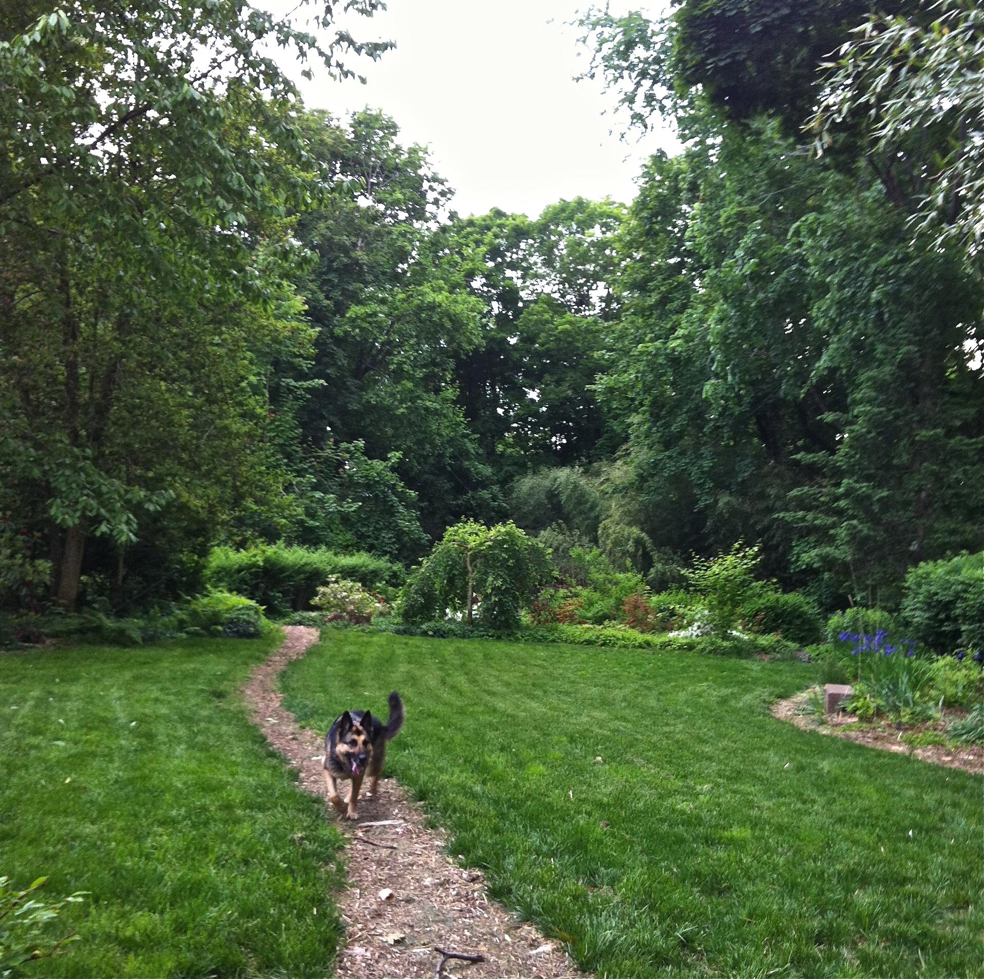 Dog-proof lawn.jpg
