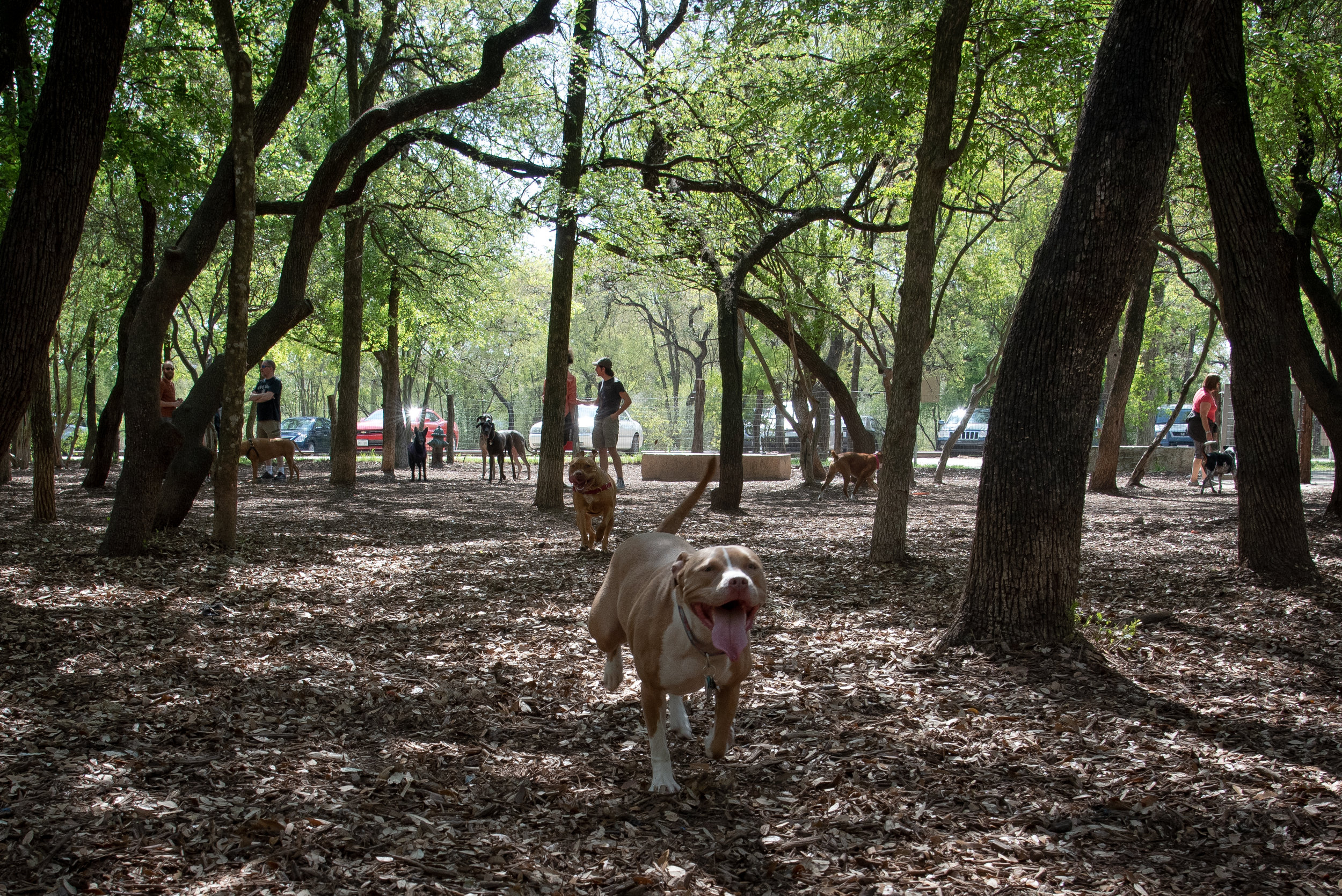 Visit the Dog parks - Take your four-legged friends out for some fun in our shady dog parks.