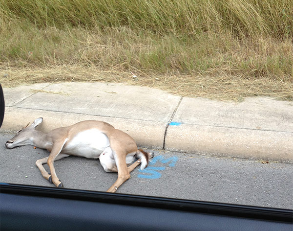 deer-pkway.jpg