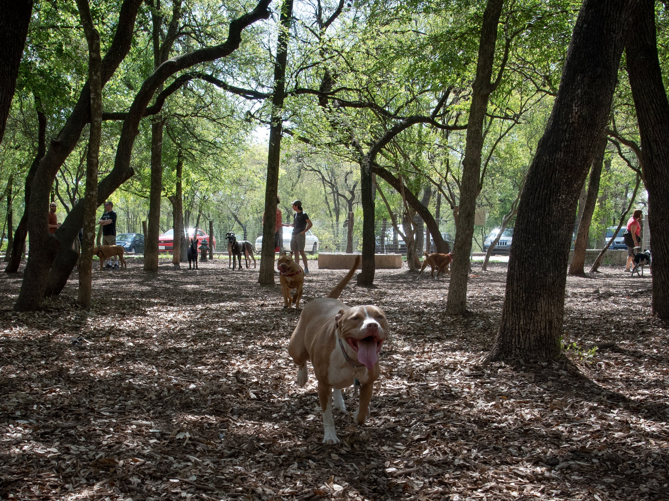 Dog Parks - Both sides of the park have dog parks. There is agility equipment, large and small dog areas, poop bags, trash receptacles, and drinking fountains for people and dogs.