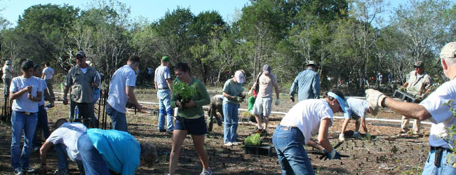 Hundreds of volunteers plant native grasses in the restored Savanna.