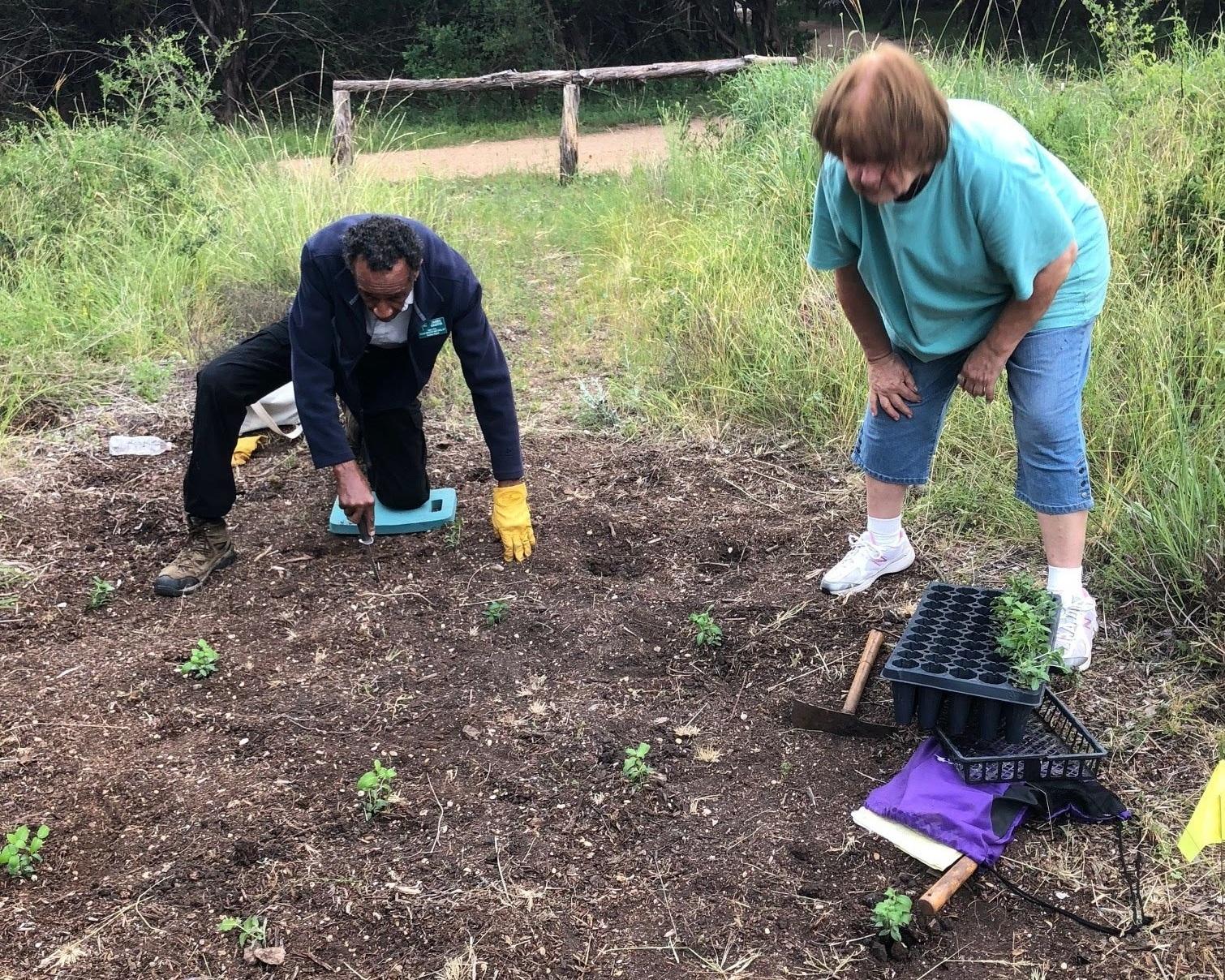 Volunteers assist in planting seedlings.