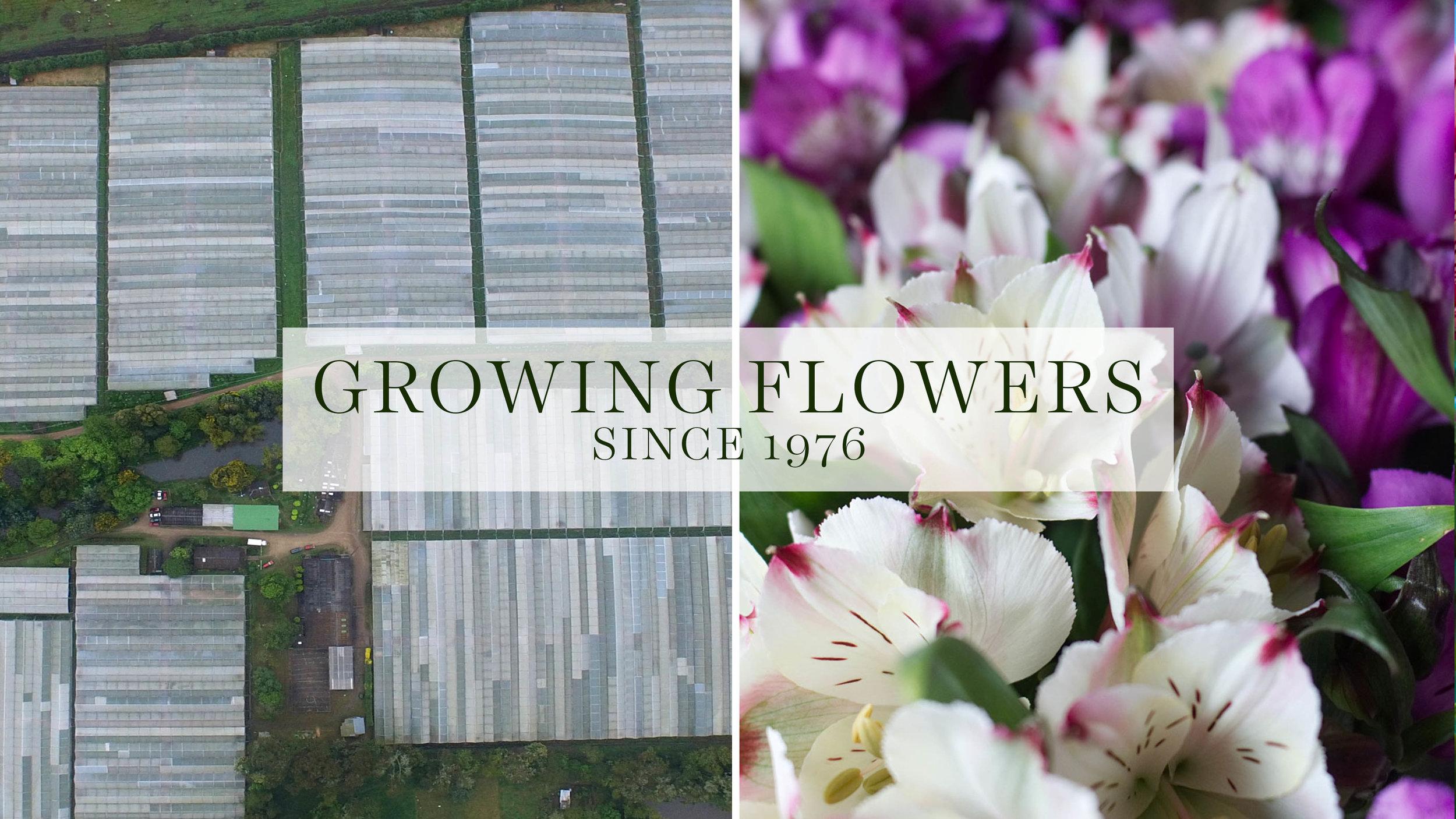 Suasuque Flowers