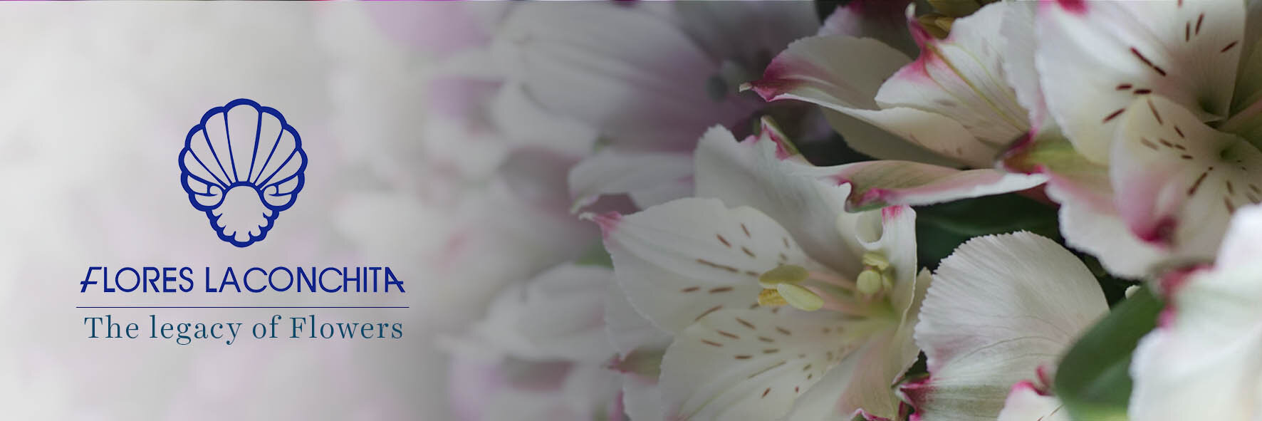 Flores la Conchita