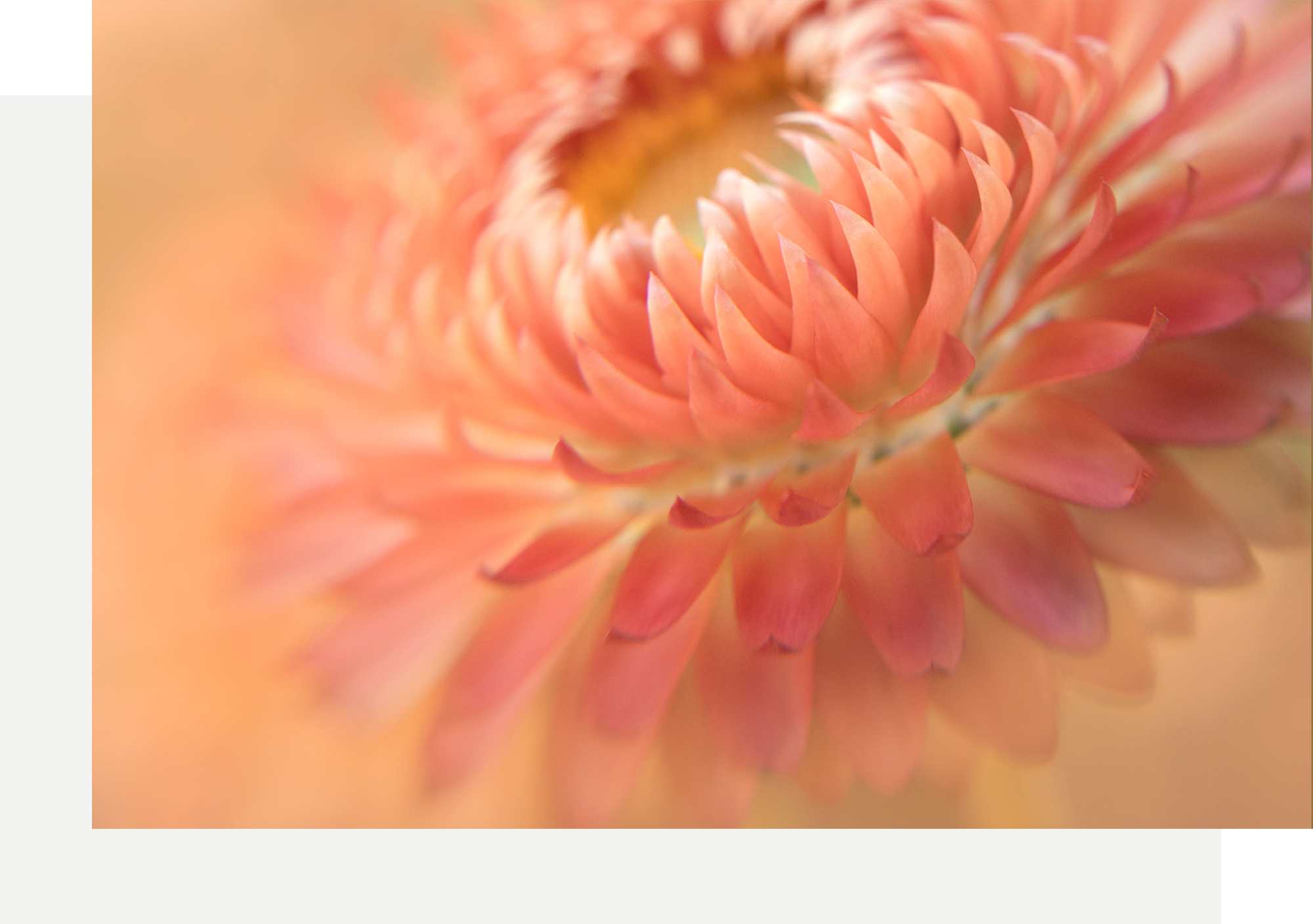 flower-portraits-with-kathleen-clemons-gather-academy.png
