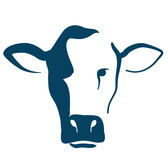 Vector icon of a cow head by Custer Creative of Hays Kansas
