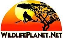 download-wildlifeplanet-wildlife-planet.jpg