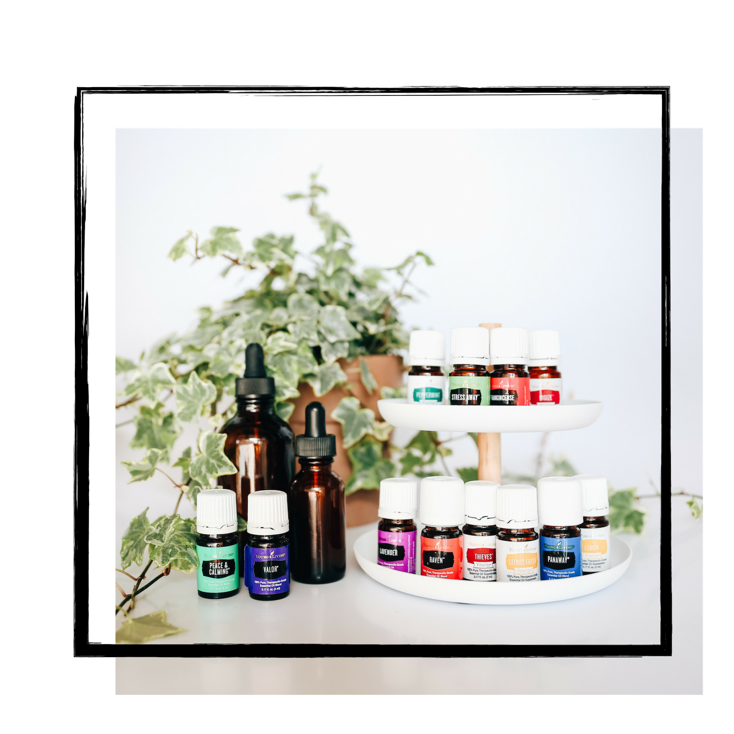 Young Living Essential Oil Teams Getting Started With Young Living