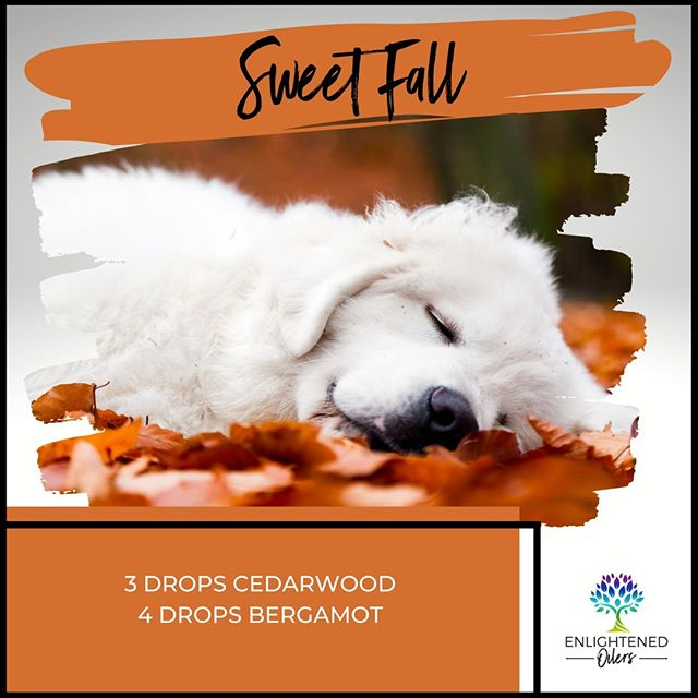 Sometimes amid all the spices of fall, we start to crave a little sweetness.  This is the perfect balance to uplift your spirits.  What or who is bringing a smile to your face today?  Sweet Fall 3💧Cedarwood 4💧Bergamot   * * * * #diffuserrecipes  #enlightenedoilers #essentialoils #youngliving #naturalliving #wellness #plantbased #essentialoilswork #essentialoilsrock #essentialoilsforlife #oilsforeverything  #yleo #younglivingessentialoils #younglivingeo #theresanoilforthat #nontoxic #holistichealth  #naturalsolutions #oilylife #oilymom #oilyfamily #sweet #fall #cedarwood #bergamot #happiness #smiles #uplifiting