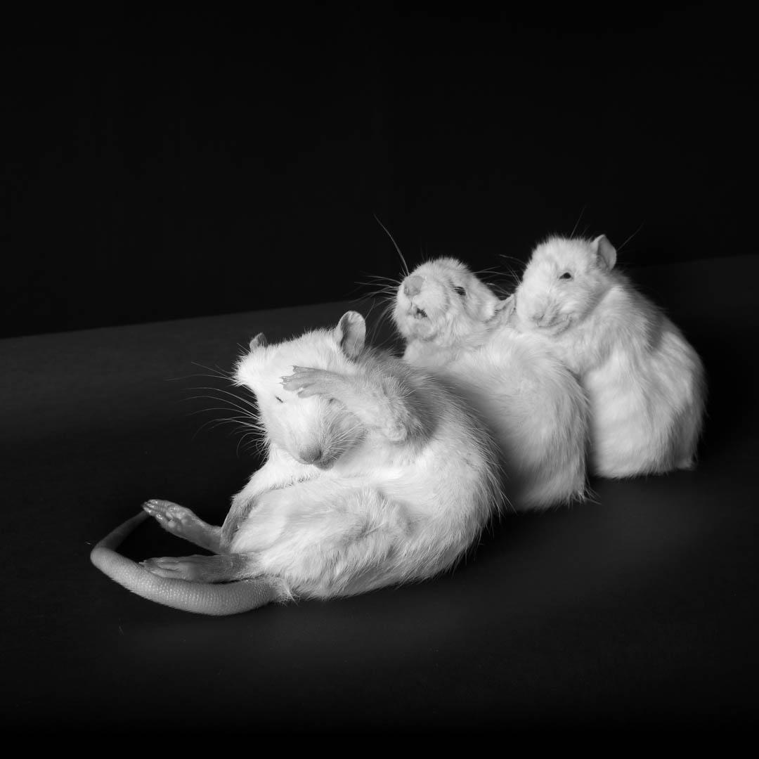 ©clarisse-rebotier-4-3.jpg