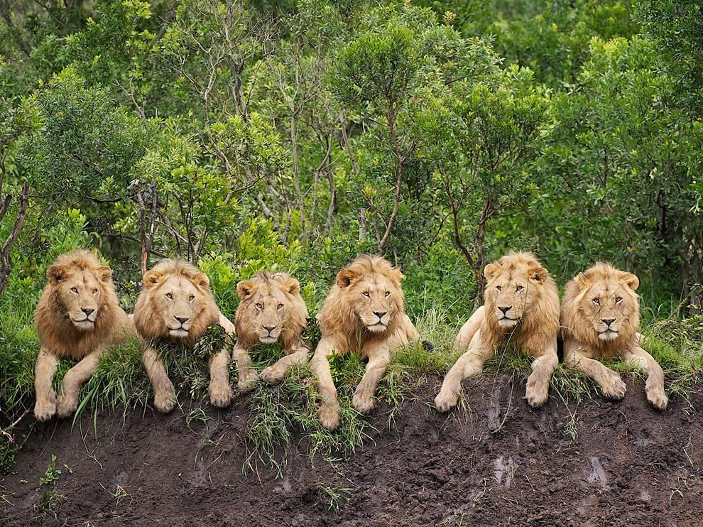 lion-image-blog-post-1.jpg
