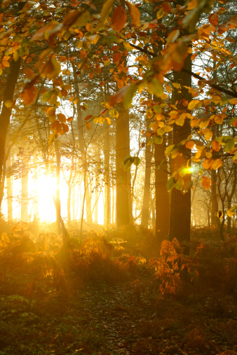 sunshiningthroughtrees.jpg