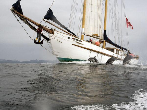 sailboatdolphin.jpg